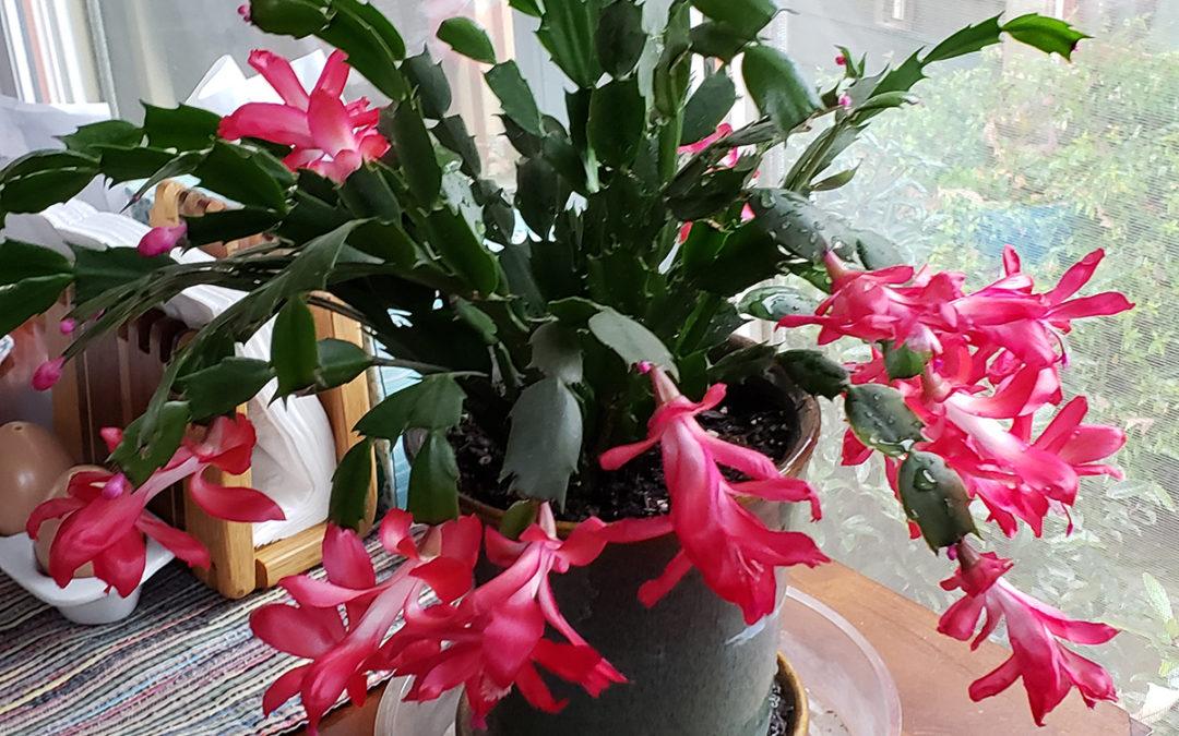 Lifespan Blooms